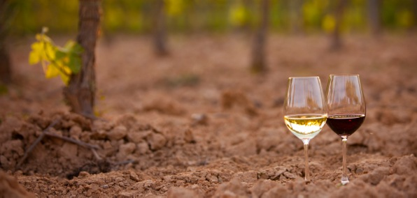 red and white wine at the penedes soil